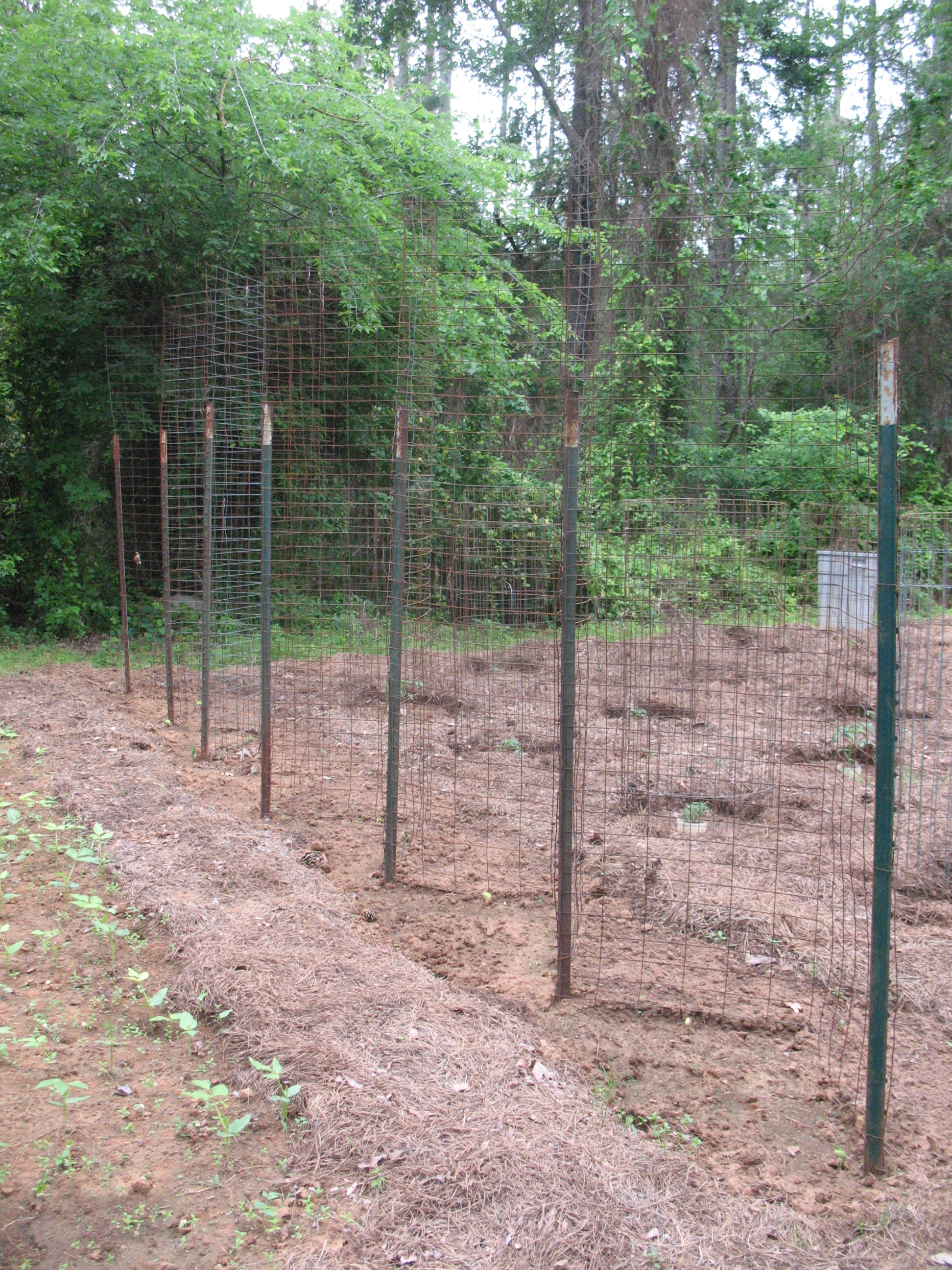 Survival gardening build a zigzag bean trellis