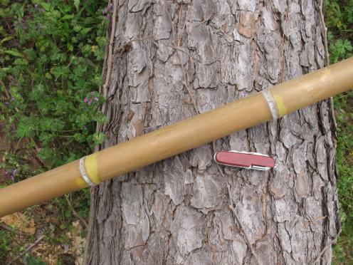 01 large bamboo
