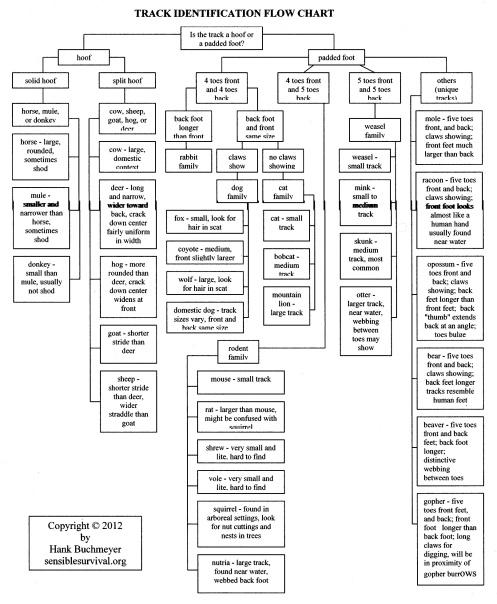 Track Analysis Flow Chart