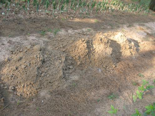 03 sand on garden bed