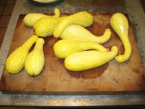01 yellow squash