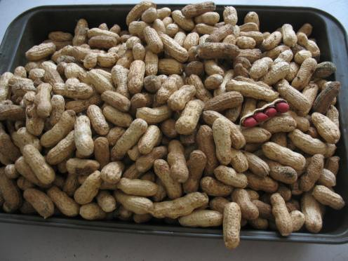 15 dried peanuts