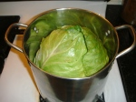 16 cabbage inwater