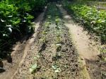 04 germination